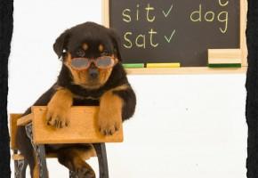 Dog Obedience School Memphis