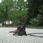 Pepper Memphis Dog Training