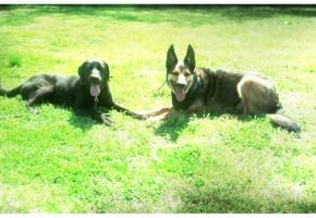 Memphis Obedience Training Sam and Niko
