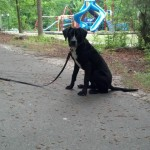 Missy dog training Memphis
