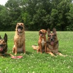 Certified Dog Trainer Drew's four dogs sitting and laying down for a picture in Memphis