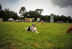Tucker Dog Events Mempis