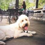 Walter Dog training lunch Memphis