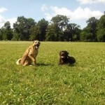 May and Gus at Park Obedience Training Memphis