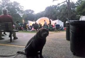 Gus dog training practice Memphis