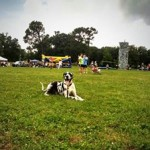 Tucker dog training practice at dog event