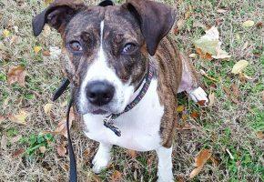 Yuli Off Leash Service Dog Trainig Memphis