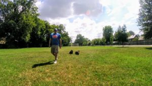 Dog Trainer Drew working on obedience in Memphis